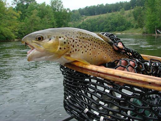 Muskegon river report guide fishing Salmon steelhead trout