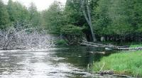 manistee river fishing guide